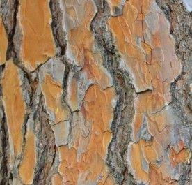 Zrębki Dekoracyjne Aqua Save Pomarańczowa 50 L Kora I
