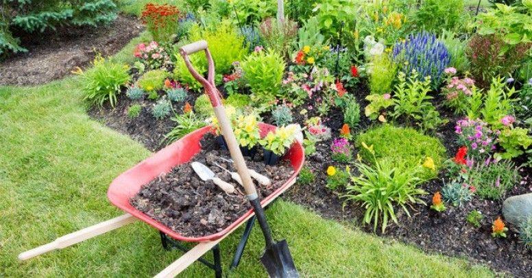 Znalezione obrazy dla zapytania rabata ogrodowa kwiatowa