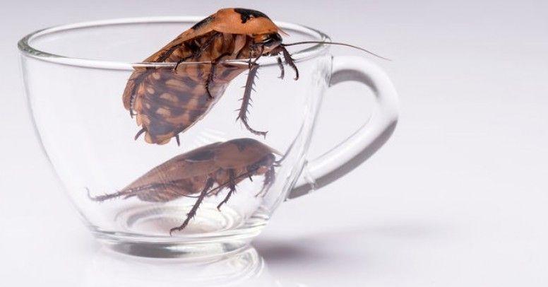 Jak Pozbyć Się Domowych Insektów Inspiracje I Porady