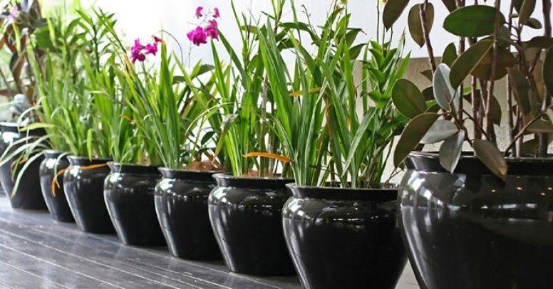 Jak Zadbać O Rośliny Podczas Urlopu Poradnik Inspiracje