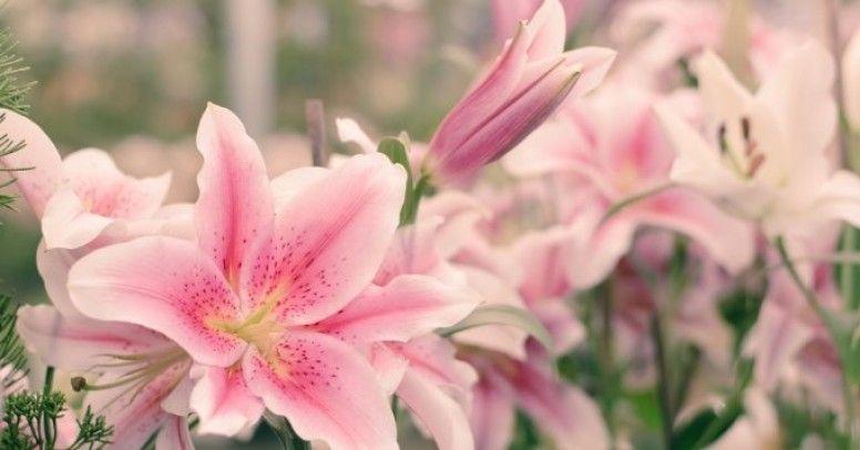 Kwiaty Pelni Lata Co Kwitnie W Lipcu Zielony Ogrodek