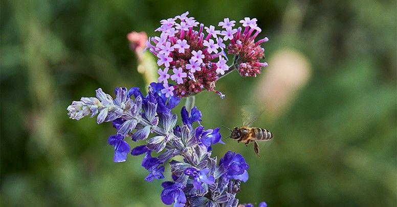Ogrod Przyjazny Pszczolom Sadzimy Rosliny Miododajne Inspiracje I Porady