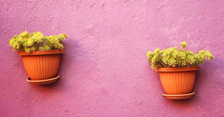 Jak Zawiesić Doniczkę Na ścianie Inspiracje I Porady