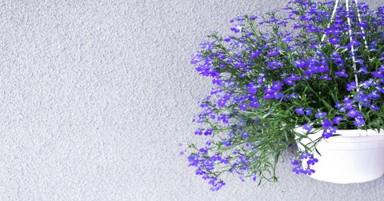 Doniczki Na Balkon Które Uwydatnią Piękno Twoich Kwiatów
