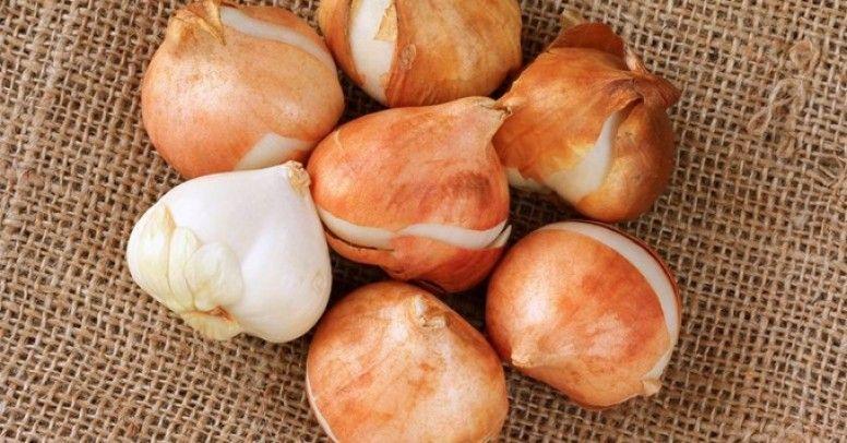 44482d1c14db4b Jak przechowywać nasiona i cebulę? - Inspiracje i porady