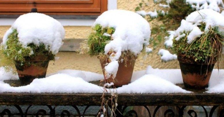 Ochrona Roślin Doniczkowych Przed Mrozem Inspiracje I Porady