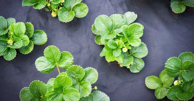 Agrowloknina Czy Agrotkanina Czym Sie Roznia I Kiedy Je Stosowac Inspiracje I Porady