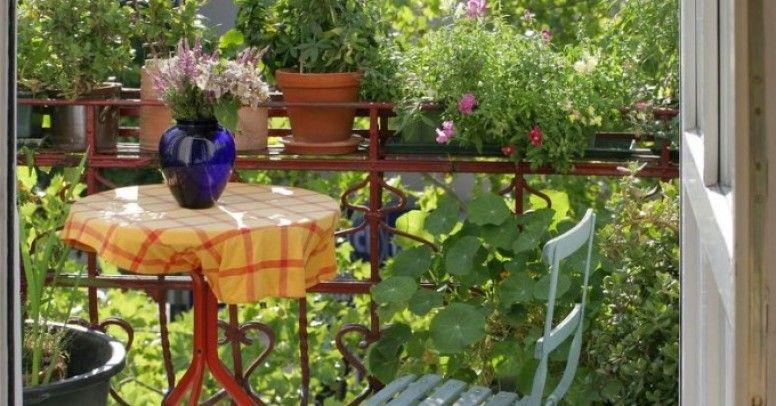 Jakie Rośliny Zasadzić Na Balkonie Północnym Inspiracje I