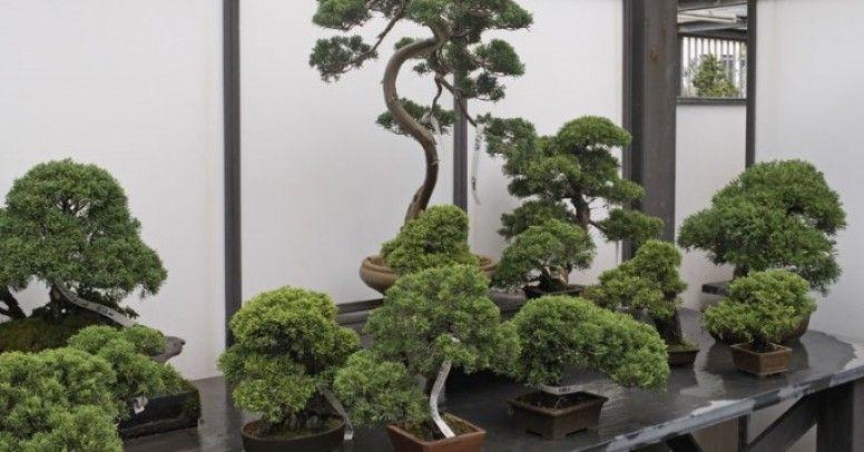 Rośliny Do Bonsai Inspiracje I Porady