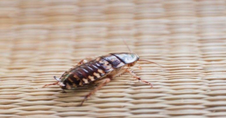 Dobry darmowy robak