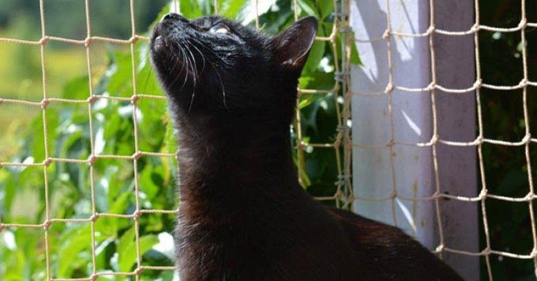 Jak Przygotować Balkon Na Wiosnę I Lato Dla Psa I Kota