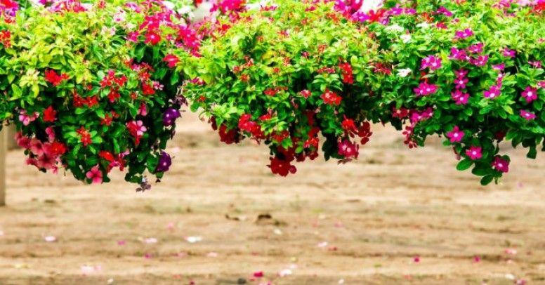 Kwiaty Doniczkowe Do Góry Nogami Nowy Trend Inspiracje I