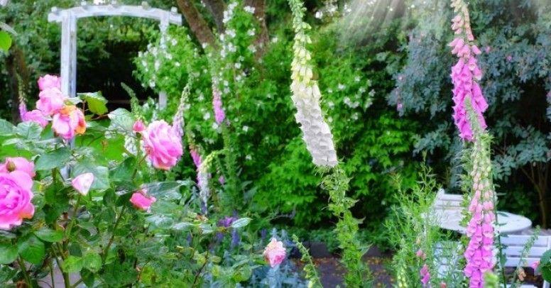 Kwiaty W Ogrodzie Od Czego Zaczac Planowanie Rabaty Castorama Budujesz Remontujesz Urzadzasz