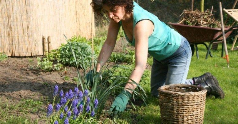 52e4728e Nakolanniki - dlaczego powinniśmy ubierać je do pracy w ogrodzie ...