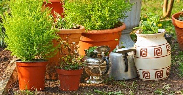 Co Jeśli Nie Typowe Donice Ciekawe Pojemniki Na Rośliny