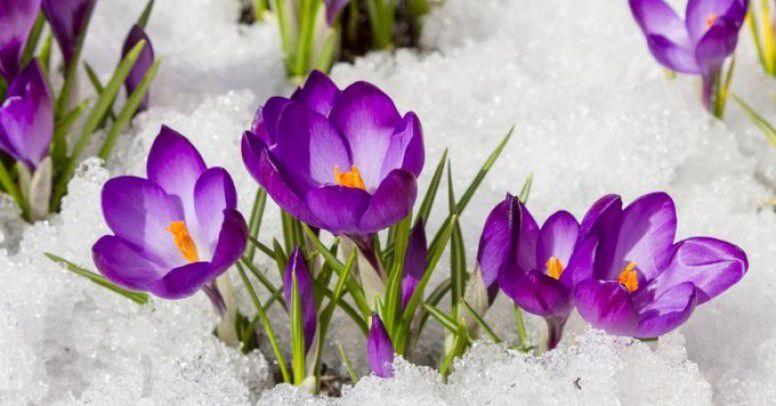 Pierwsze Wiosenne Kwiaty Ktore Warto Hodowac Inspiracje I Porady