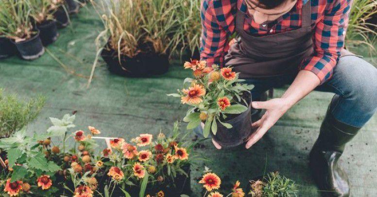 Przesadzamy Rośliny Na Wiosnę Jakie Doniczki Inspiracje
