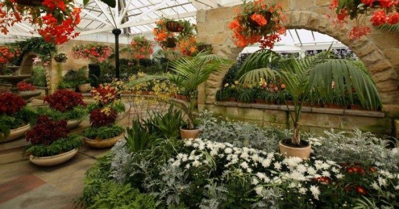 Rośliny Do Ogrodu Zimowego Inspiracje I Porady
