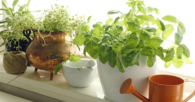 Rośliny Na Parapecie Jak Stworzyć Mini Ogródek W
