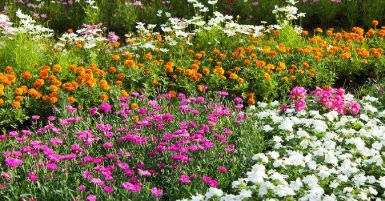 Jak Urządzić Ogród Swobodny Inspiracje I Porady