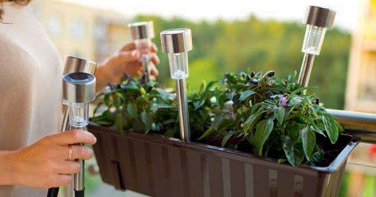 Jakie Warzywa Zioła I Kwiaty Można Uprawiać Na Balkonie