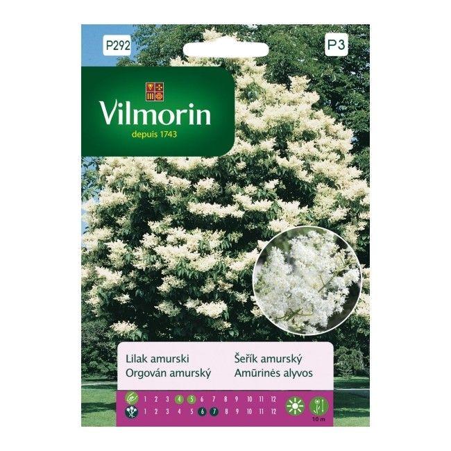 Nasiona lilak Amurski Vilmorin