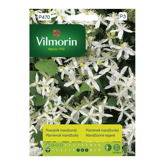 Nasiona powojnik mandżurski Vilmorin