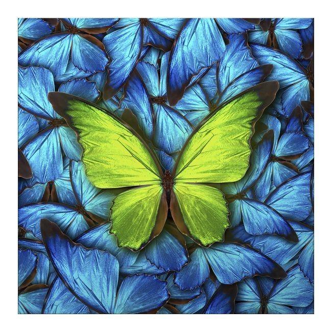 Obraz Glasspik Butterfly Blue 20 X 20 Cm Obrazy Obrazy I