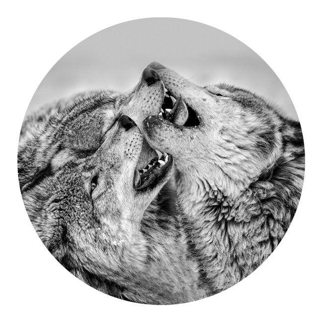 Obraz Glasspik Koło Wolves Fi 70 Cm Obrazy Obrazy I Ramiarstwo
