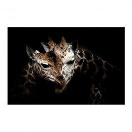 Obraz Glasspik Giraffe 2 70 X 100 Cm