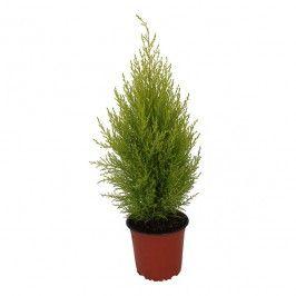 Rośliny Domowe Rośliny I Materiały Siewne Ogród