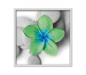 Obraz 20 x 20 cm Zielony kwiat