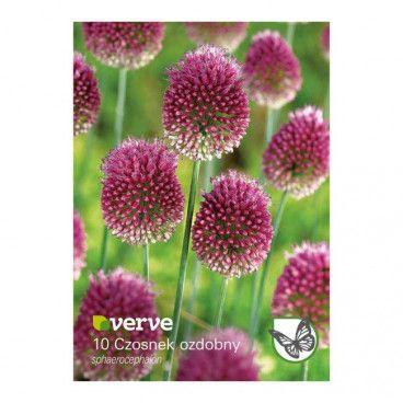 Cebule czosnek Verve Sphaerocephalon 10 szt.