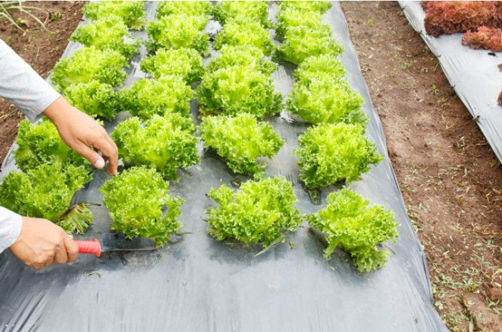 Wielofunkcyjna Agrowloknina Jaka Wybrac Inspiracje I Porady