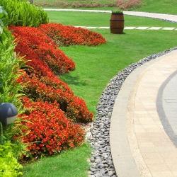 czerwone rośliny