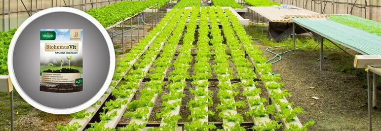 Zaprawa do nasion Vilmorin Biohumus Vit 0,2 l