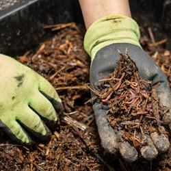 Użyźniające glebę dżdżownice