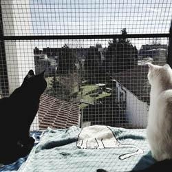 Koty na balkonie