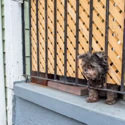 Maly pies na balkonie