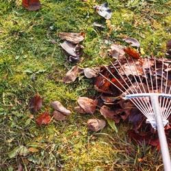 Grabienie liści z trawnika