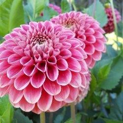 Jakie Kwiaty Sadzic By Cieszyc Sie W Nimi W Lecie Inspiracje I Porady
