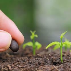 Sadzenie nasion