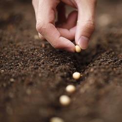 Nasiona w glebie