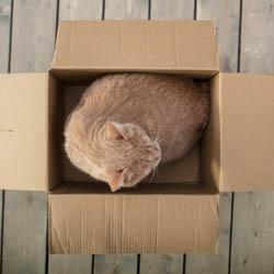 Karton dla kota