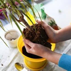 Przesadzanie roślin
