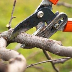 Sekator praktyczne narzędzie do ogrodu