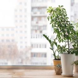 Rośliny na drewnianym parapecie