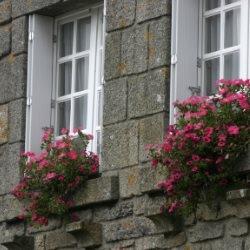 Rośliny doniczkowe na parapetach okiennych
