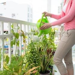 zdrowe rosliny balkonowe