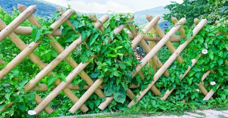 rodzaje płotków ogrodowych